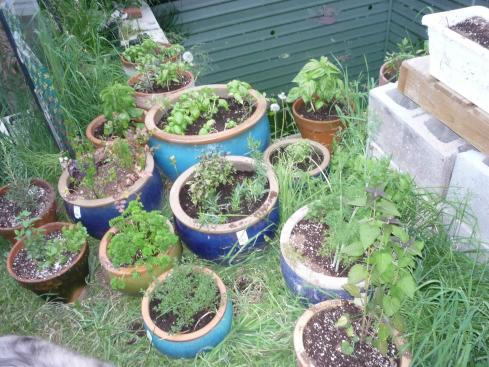 my herb garden 1 small