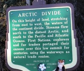 fox & arctic divide