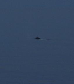 11 whale