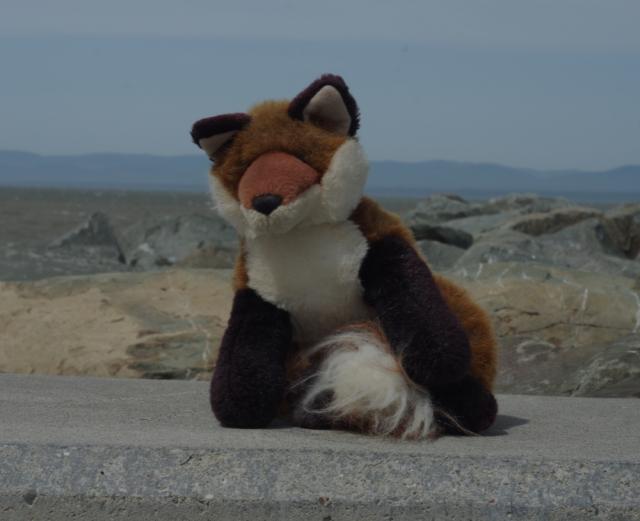 6 dr fox at pier