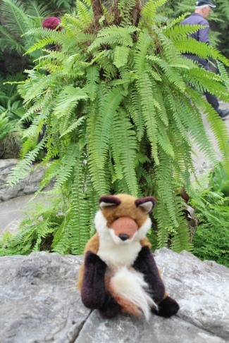 dr fox and ferns