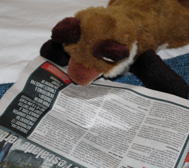 dr fox and journal