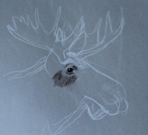 moose attempt